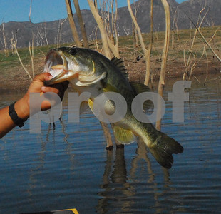 handling-a-bass-properly-improves-the-chances-of-catching-it-another-day