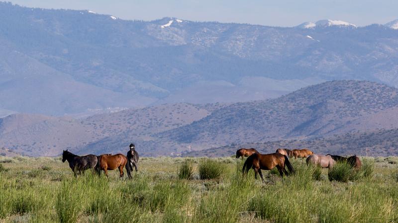 Wild Mustangs 2019-47.jpg
