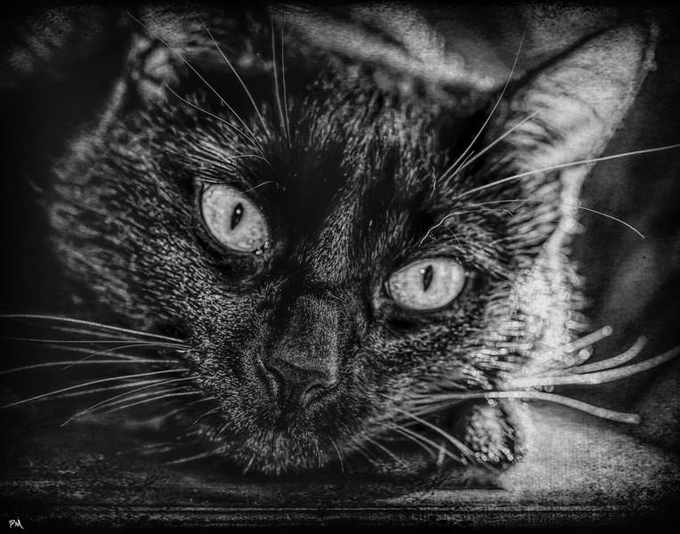 Drew Cat