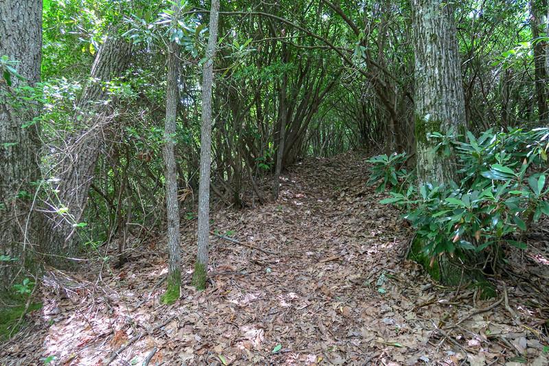 Green Mountain Trail -- 4,150'