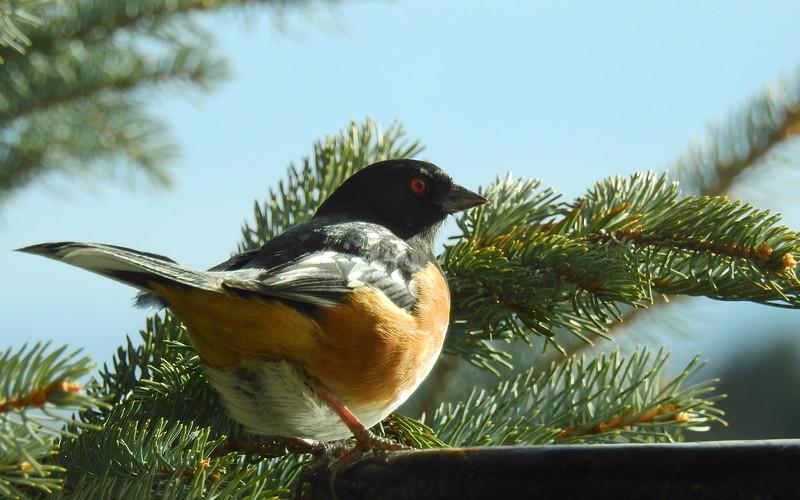 birds (207).JPG