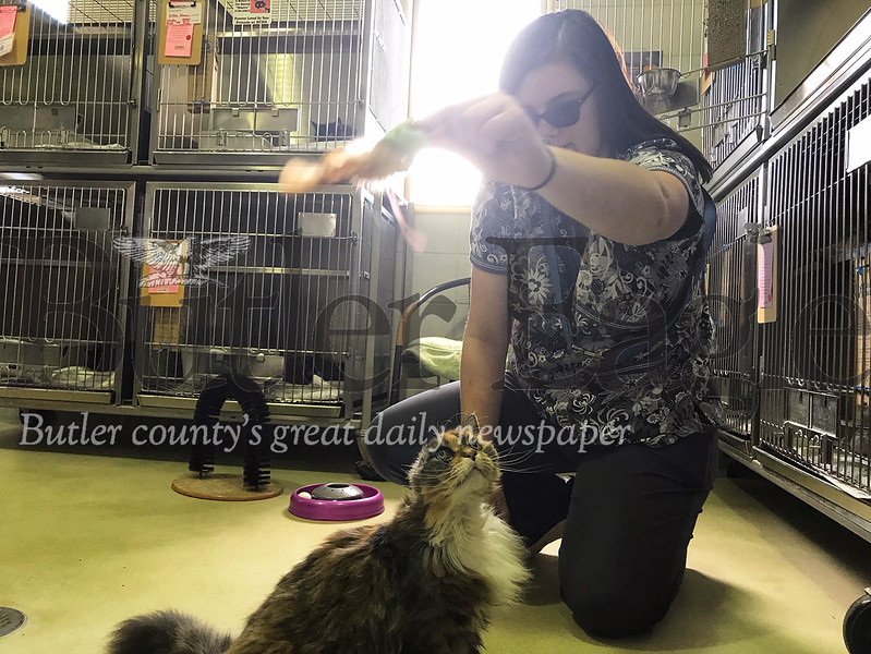 Emily Brooks, Butler County Humane Society kennel attendant, plays with Lillian, a 10-year-old domestic medium hair mix.