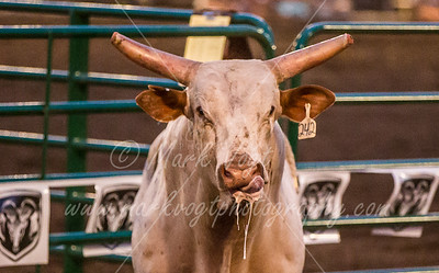 08-25-2016  Rodeo PRCA Xtreme Bulls