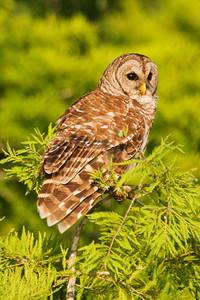 June 13, 2010 - Florida Owls