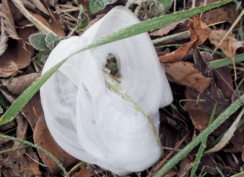 Frost Flowers in MO