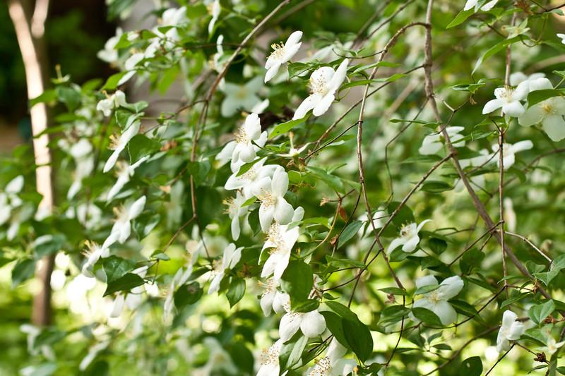 Moms_garden7.jpg