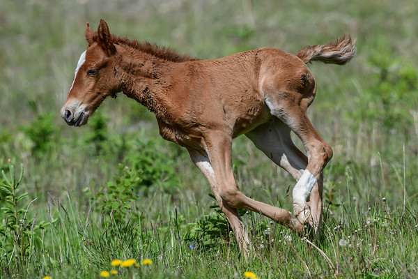 6-17-17 Ab. Wildies - Nordegg Industial Band - Wounded Foal