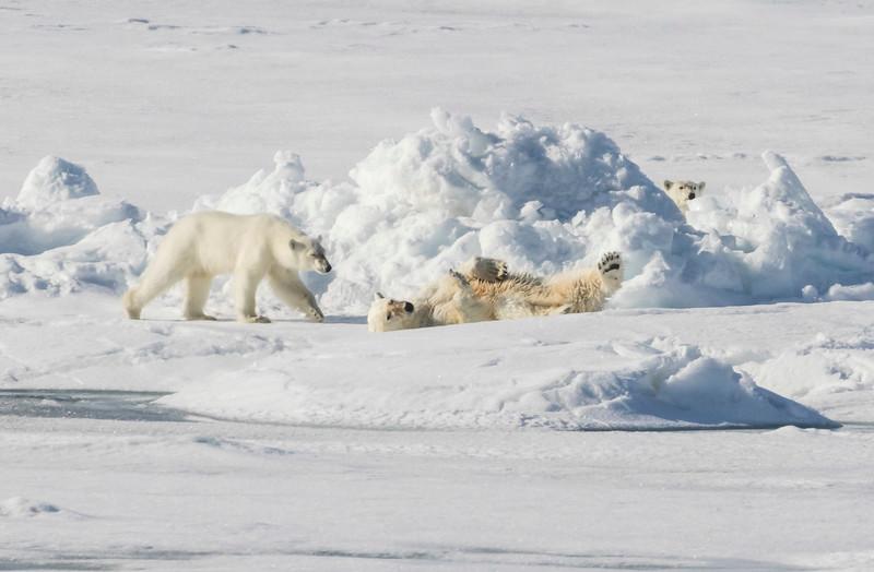 Inspirato-Arctic_Expedition18-05-Bear_Fjord-2152.jpg