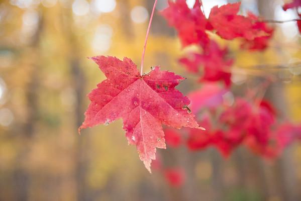 Leaf Symphony