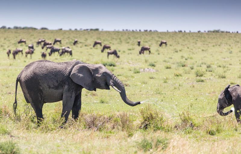 Africa - 101416 - 2488.jpg