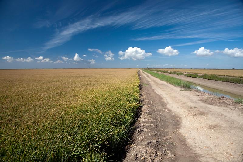 Camino entre los arrozales de Isla Mayor (Sevilla), en el entorno de Doñana.