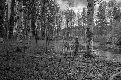 Idaho Swamps