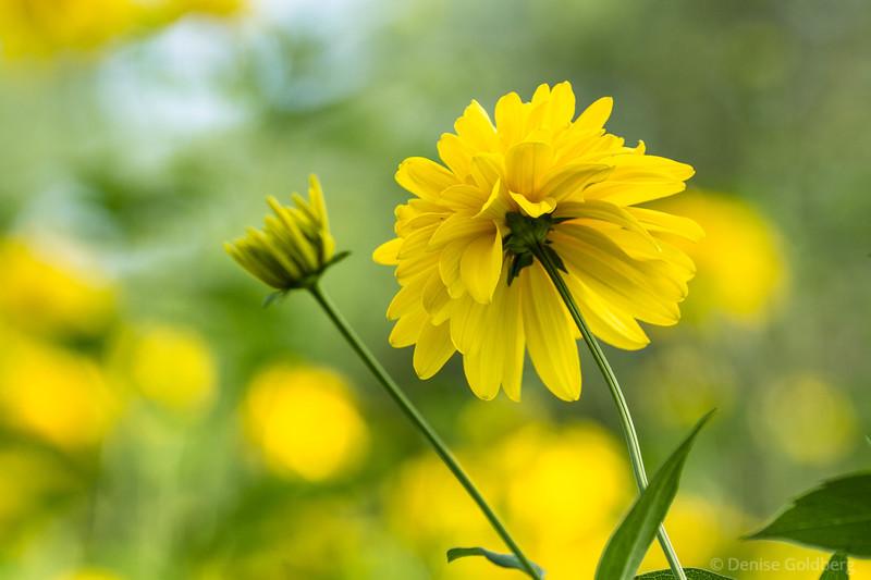 a splash of (summer) yellow