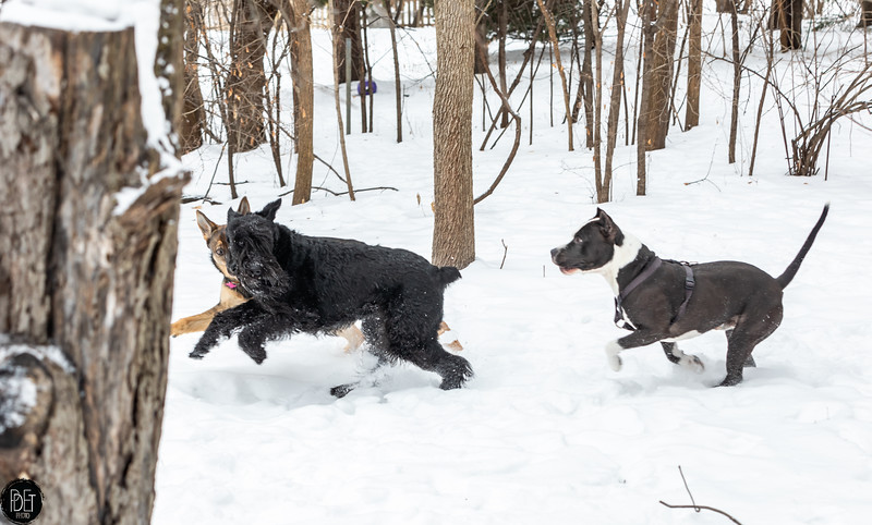 1/24/2019 - Inga, Doug, Zoey