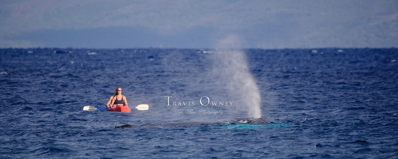 2010 Maui-116.jpg
