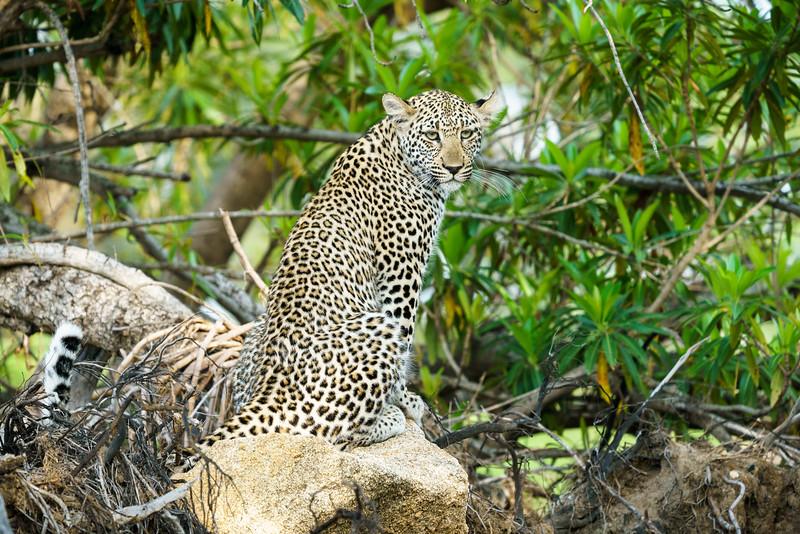 LeopardHills-20171024-1917.jpg