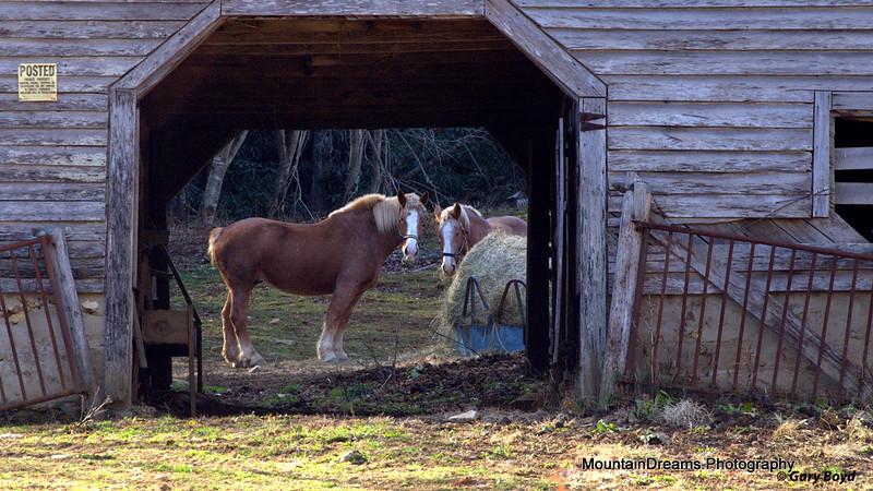 Rominger Road Barn, Watauga County, NC