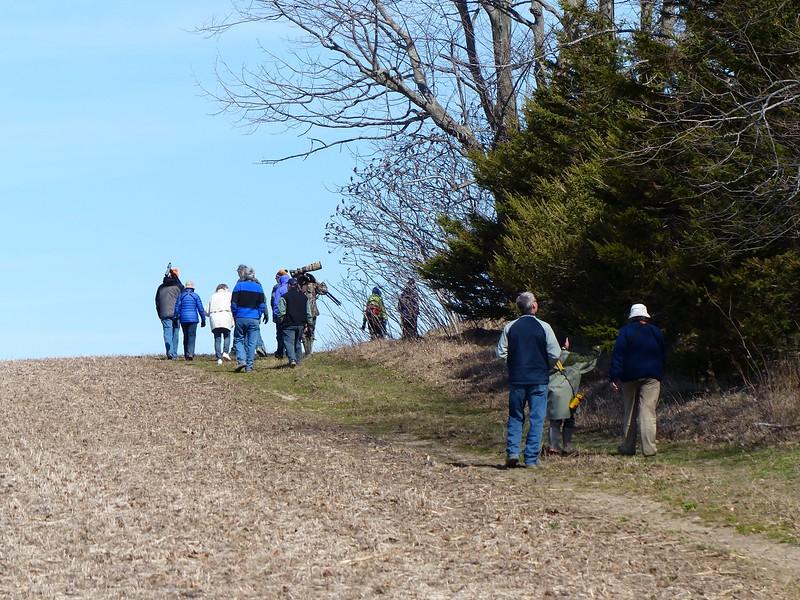 Looking for birds along tree line between fields