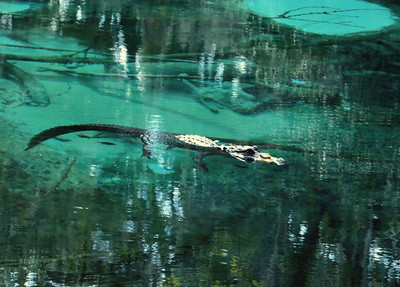 09.02.13~Juniper Spring Ocala National Forest