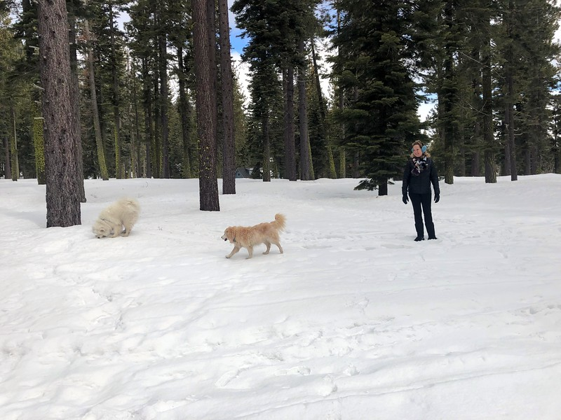 2019-03-21-0020-Trip to Tahoe with Dogs-Lake Tahoe-Debby-Teddy the Dog-Leo the Dog.JPG