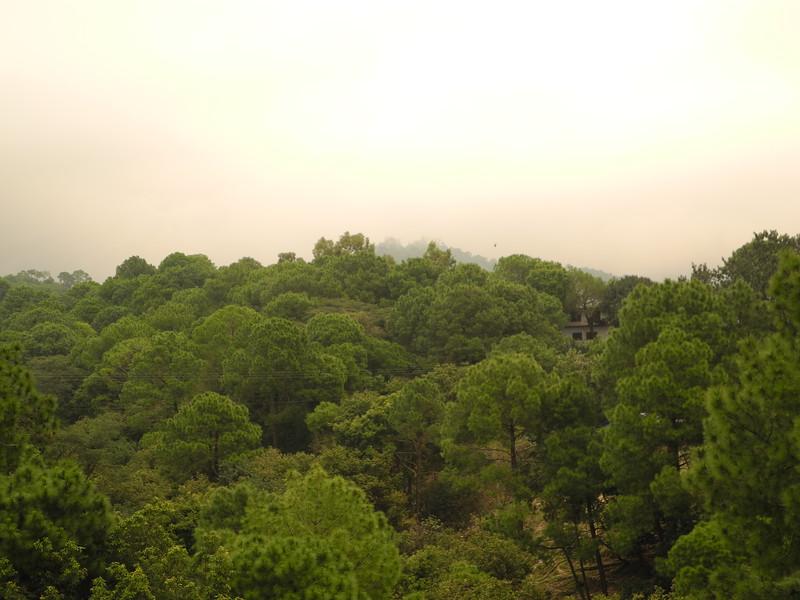 india2011 335.jpg
