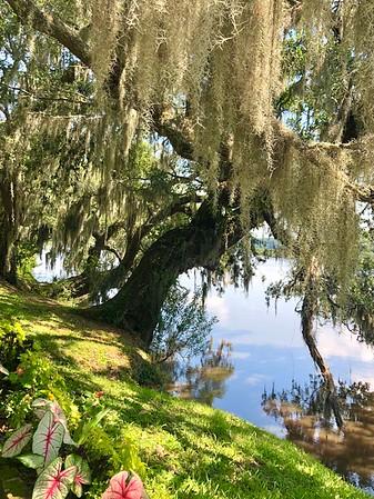 2020 Charleston, SC / Isle of Palms