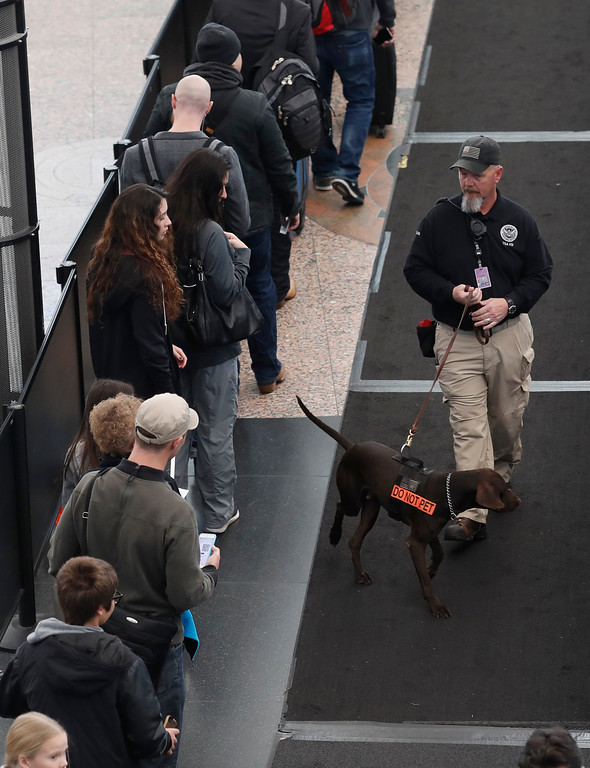 . A security officer guides his dog along a long line of travelers waiting at a checkpoint in Denver International Airport early Wednesday, Nov. 23, 2016, in Denver. Travelers are criss-crossing the country Wednesday, clogging airport terminals in a rush to reach their Thanksgiving Day destinations. (AP Photo/David Zalubowski)