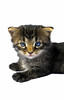 Cute black and grey tabby colored kitten. Photography fine art photo prints print photos photograph photographs image images artwork.