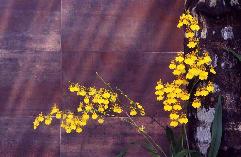 14_orchids.jpg