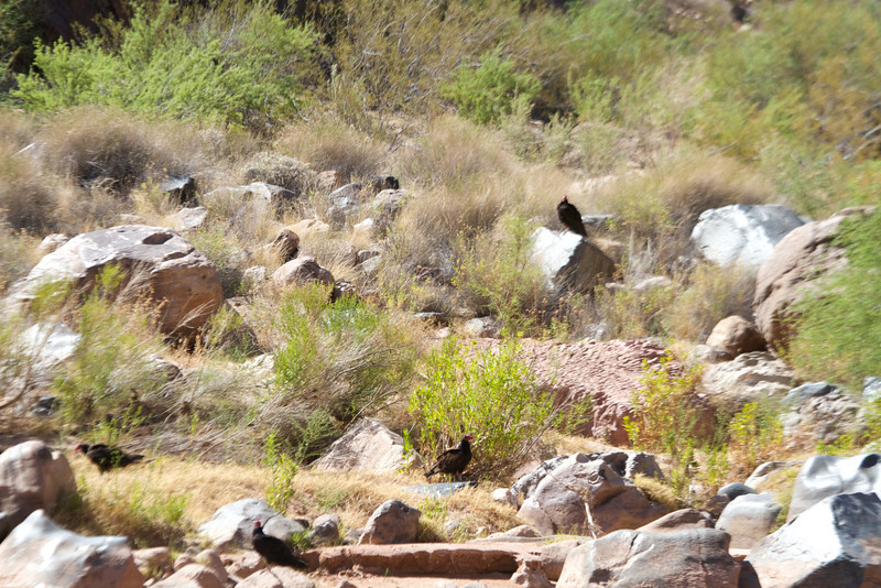 2014_Grand_Canyon_WHDW2_7D 69