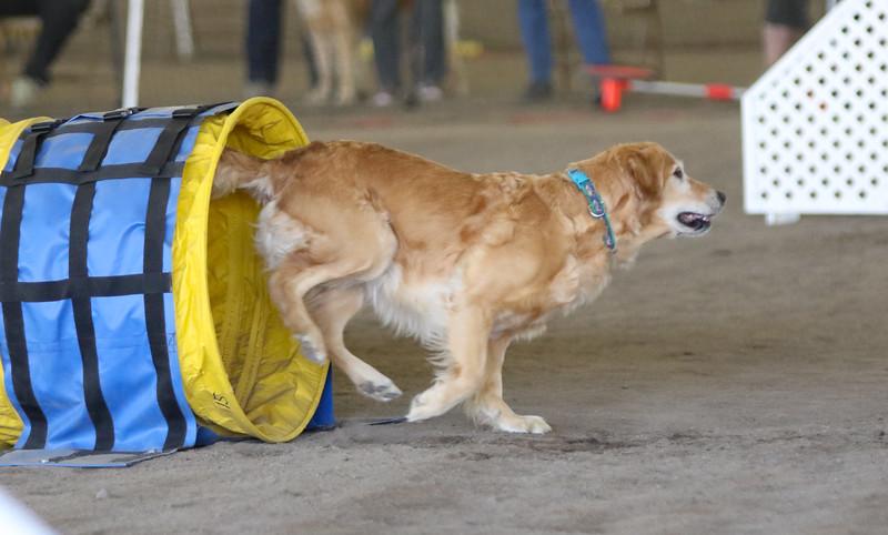 3-15-2015 Bloodhound-1538.jpg