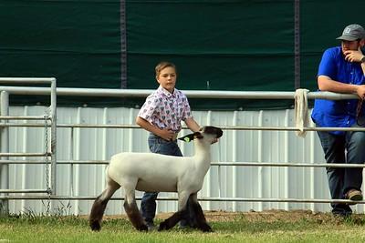 Junior Sheep Showmanship Sat