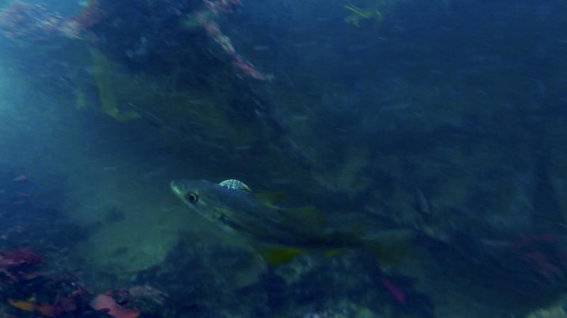 Devon-Underwater-7.jpg