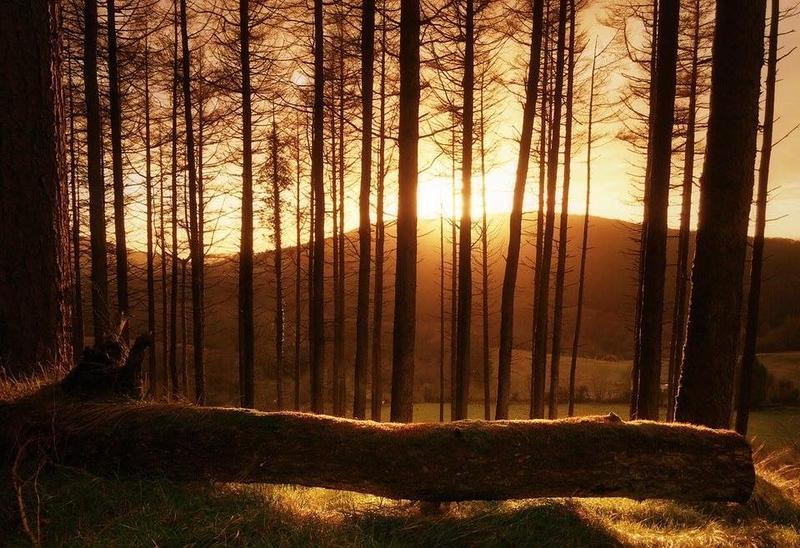 Golden Hour - Slieve Bloom Mountains.jpg