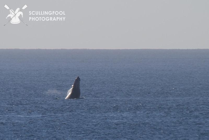 IMG_0275-whale.jpg