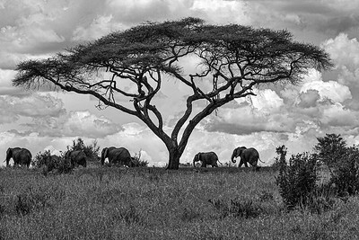 Wildlife in monochrome