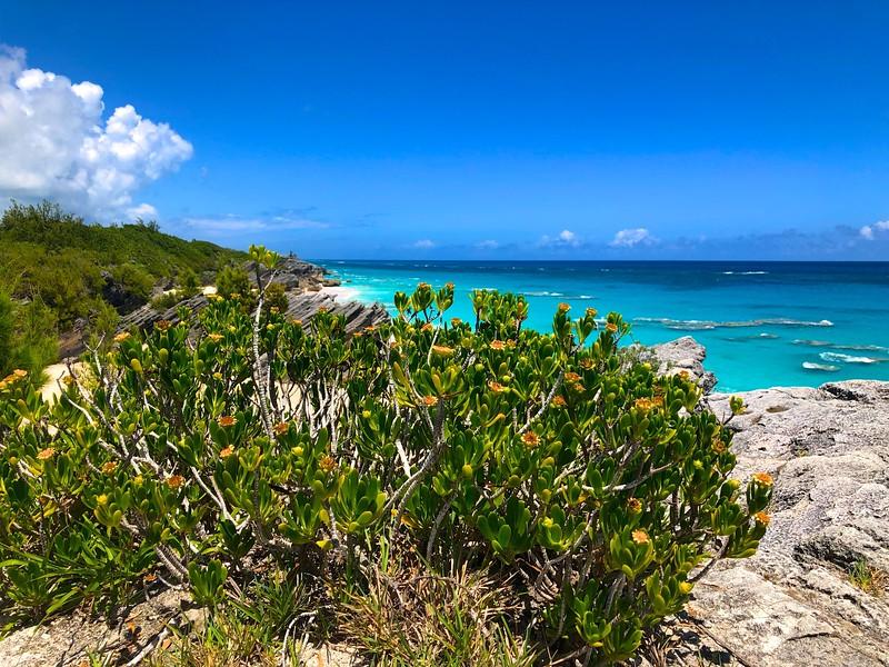 Bermuda 7-1837.jpg