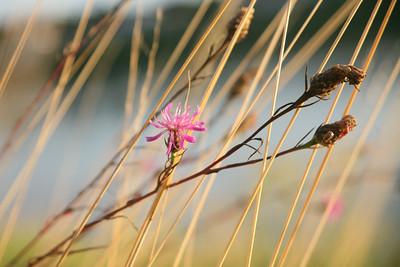 Diverses Fleurs ROSES
