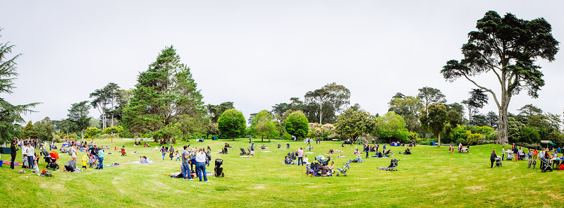 San Francisco Botanical Garden at Strybing Arboretum, Celebrating the 75th Anniversary, 1940-2015