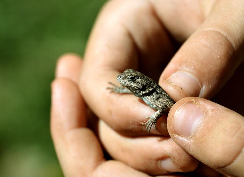 Elijan-lizard.jpg