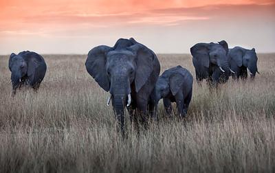 Kenya/Tanzania 2012