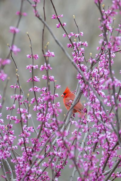 Seasons of Cardinals