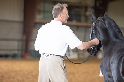 Horse 486