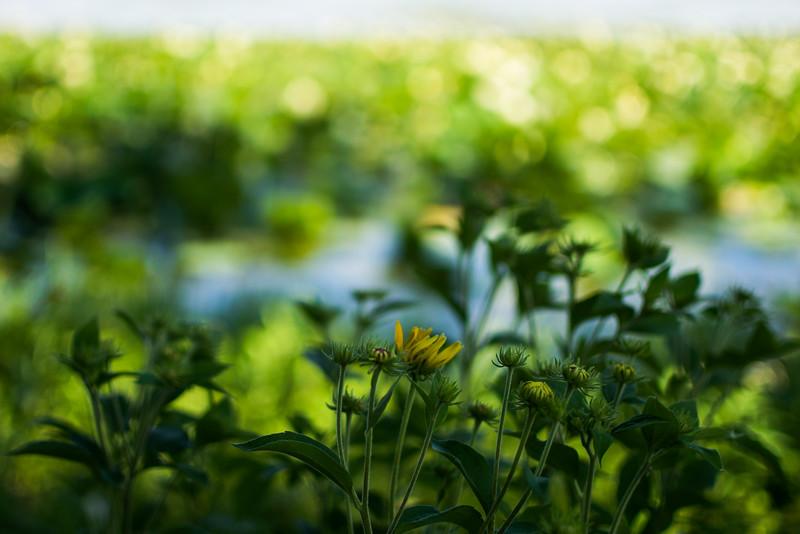 Flowers by Lake Mendota