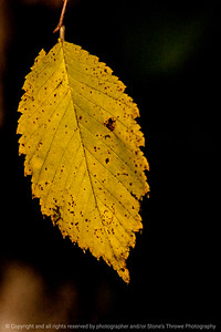 015-leaf_autumn-wdsm-28oct13-1002