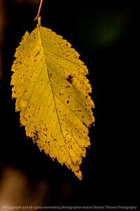 015-leaf_autumn-wdsm-28oct13-1002