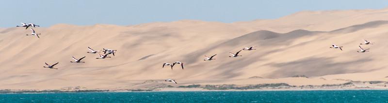 Flock of birds on flight at Namib Desert