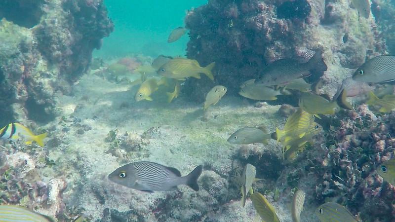 Snorkling with Fury Island Adventure, Key West, FL - Dec. 15, 2019-GOPR1862-3-007.jpg
