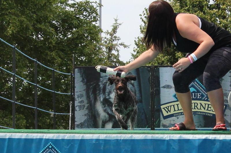 2015.8.6 Winnebago County Fair Dock Dogs (59).JPG