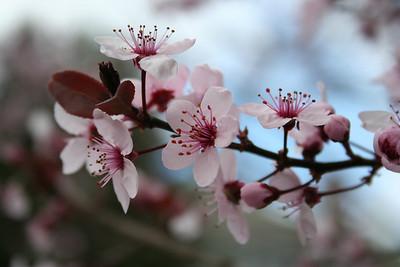 Spring Flowers 2007